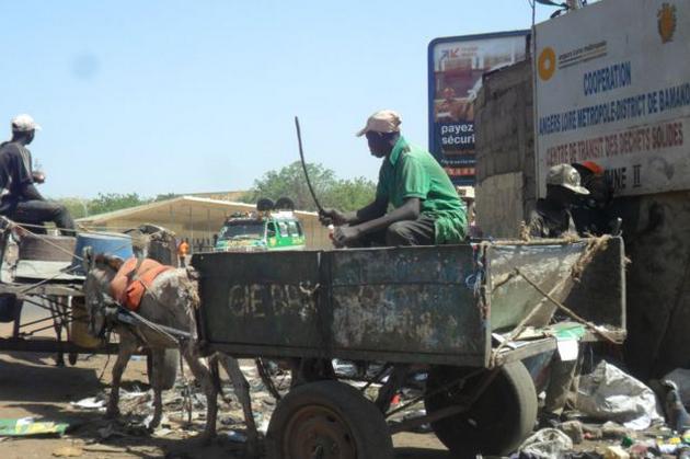 Bamako : des ânes collecteurs d'ordures