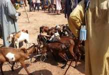 Photo d'illustration. Ici, le marché de bétail de Mokko au Niger. © © RFI/Sayouba Traoré
