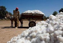 Politique agricole au Mali